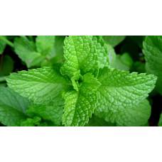 Herb Mint (50 Seeds)
