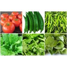 Best Selling Vegetable Seeds Kit