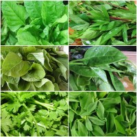 Leafy vegetable seeds  combo pack