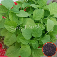 Amaranth Green(Thotakura) (800 Seeds)