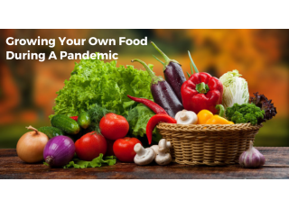 Growing Your Own Food During A Pandemic