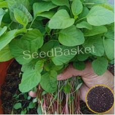 Amaranth Red(Koya Thotakura) (800 Seeds)