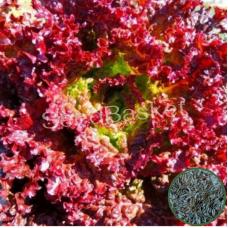 Microgreen Lettuce Lollo Rossa Seeds(1750 seeds)