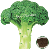 Broccoli  (200 Seeds)