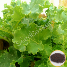 Curly Kale (200 Seeds)