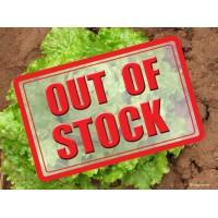Lettuce (100 Seeds)