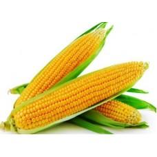 Indian Corn/Maize (25 seeds)