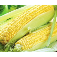 Sweet Corn (40+ Seeds)