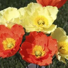 Iceland Poppy - Papaver naudicaule Mix