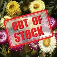 Strawflower - Helichrysum Songs Mixed