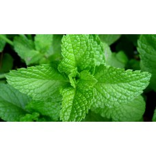 Herb Mint (50 Seeds)
