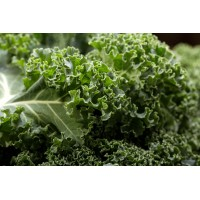 Herb Curly Kale (100 Seeds)