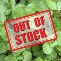 Herb Watercress (50 Seeds)