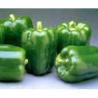 Capsicum Green (50 Seeds)