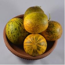 Sambar Cucumber(Dosakaya)- 50 Seeds