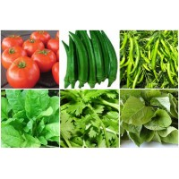 Best Selling Vegetable Seeds Kit