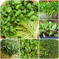 Micro Green Seeds Pack of 5