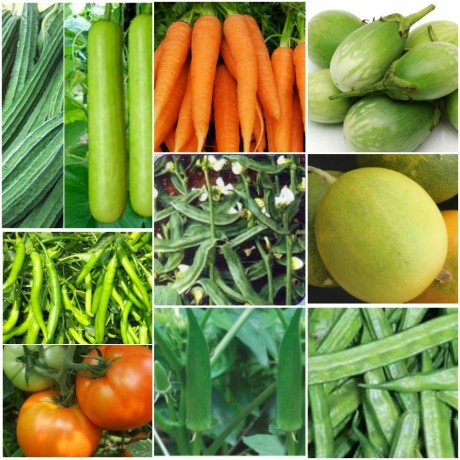 Vegetable seeds kit pack of 12