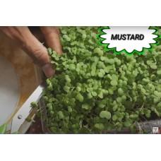 Microgreen Mustard Seeds (30 Grms)
