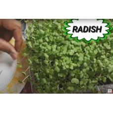 Microgreen Radish Seeds(20 Grms)