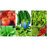 Gift Pack Best Selling Vegetable Seeds kit