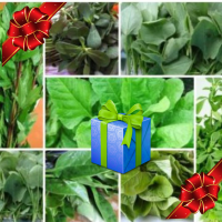 Gift Pack Leafy vegetable seeds kit