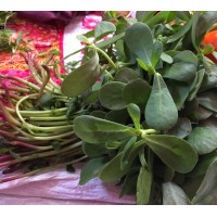 Gangavalli/Purslane leaves(400 seeds)