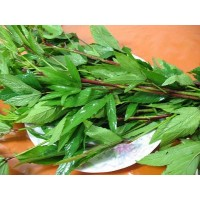 Sorrel Leaves(Gongura Red) (300 Seeds)