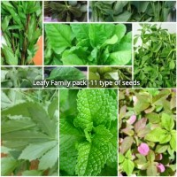 Leafy Seeds Family Pack of 11
