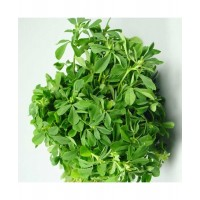 Methi (400 Seeds)