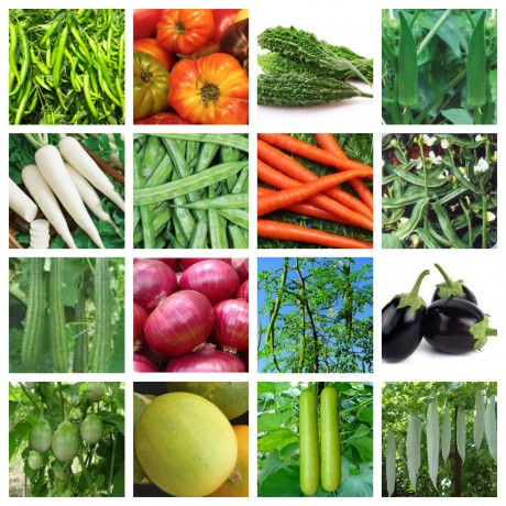 Vegetable seeds kit pack of 16