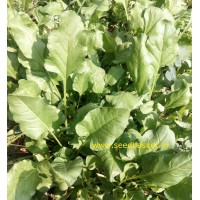 Palak/Spinach (300+ Seeds)