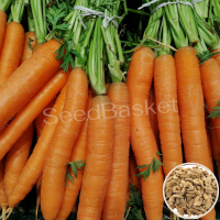 Carrot Non Hybrid  (100+ Seeds)