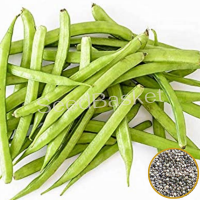 Cluster Beans (50+ Seeds)