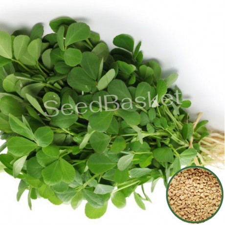 Methi (350 Seeds)