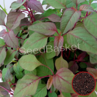 Red Amaranth (800 Seeds)