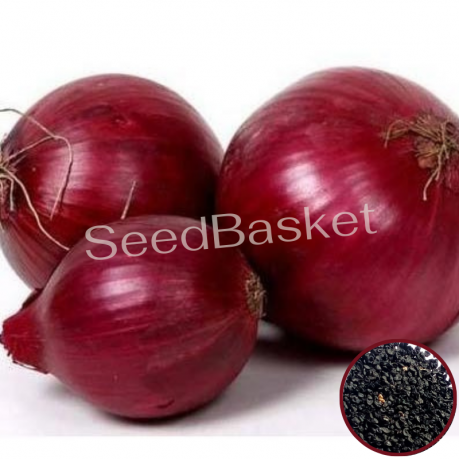 Onion Red (100 Seeds)