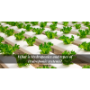 What is Hydroponics and types of Hydroponic systems?