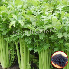Celery (200 Seeds)