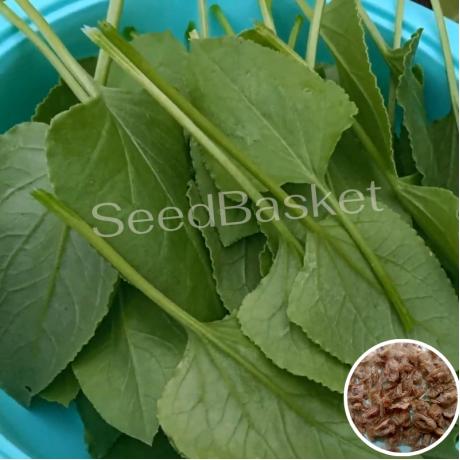 Chukka Kura (250+ Seeds)